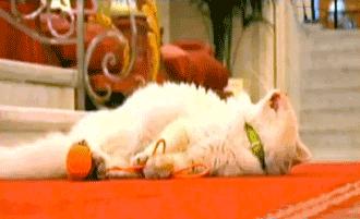 cat sleeps le bristol
